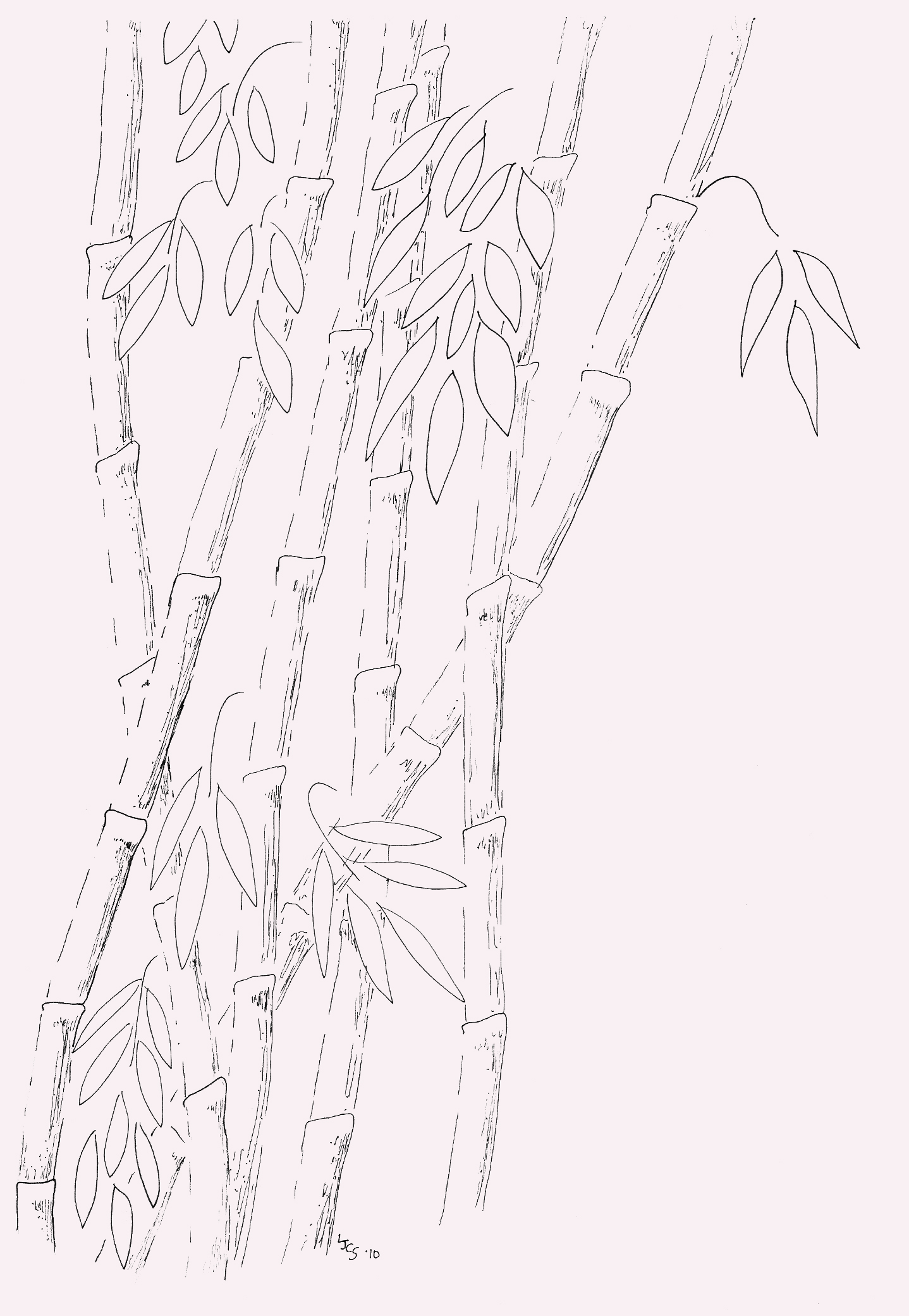 Pen And Ink Drawing Bamboo